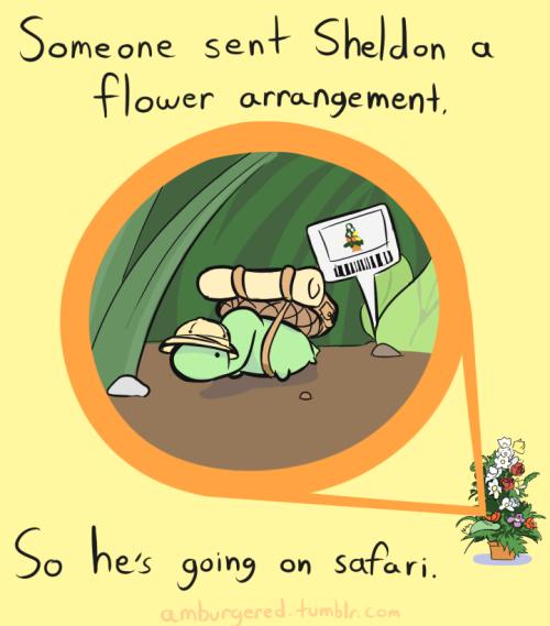 Alguém mandou um buquê de flores para Sheldon. Então ele está indo em um safári.