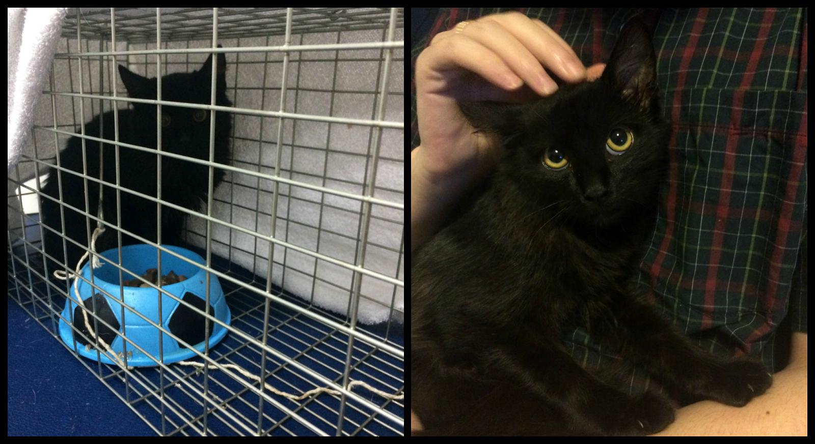 Evey na gatoeira, quando foi capturada (esquerda) e ela no terceiro dia com a gente (direita).